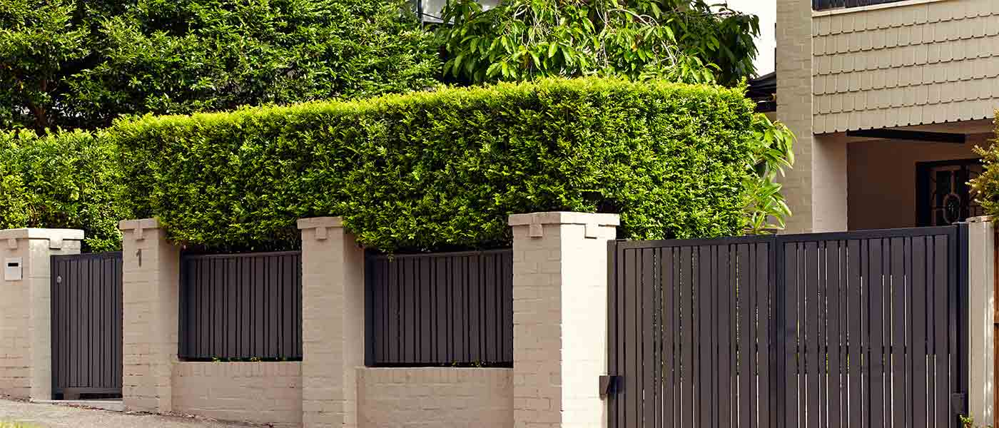Randwick landscape design maintenance plan 3 growing for Garden maintenance plan
