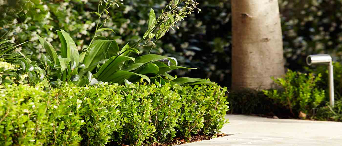 Using plants of different heights adds depth and interest to a garden