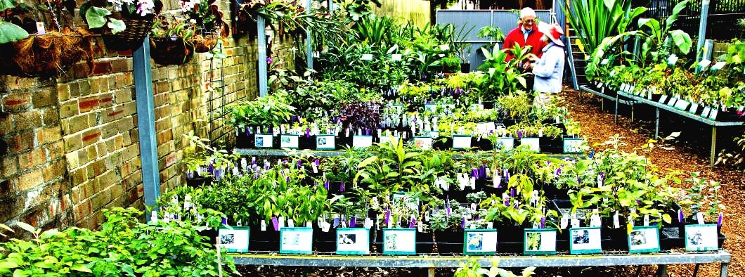 plants for dale in Botanical gardens Sydney