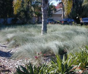 Native grasses for the australian garden growing rooms there are many ways to use native grasses in the garden workwithnaturefo