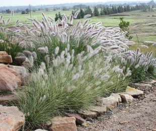 natural grass in landscape design