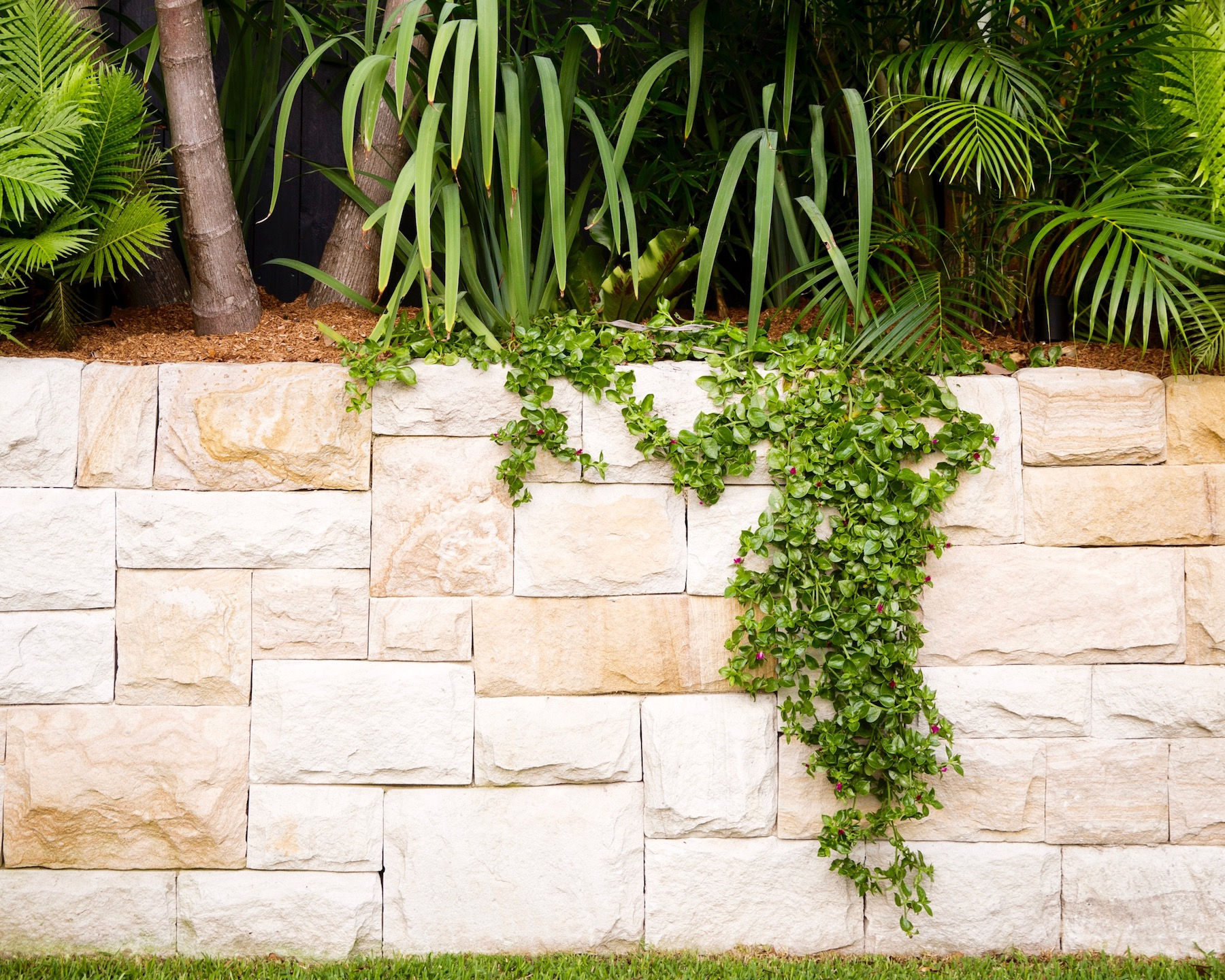 Bondi multiple level garden with sandstone wall