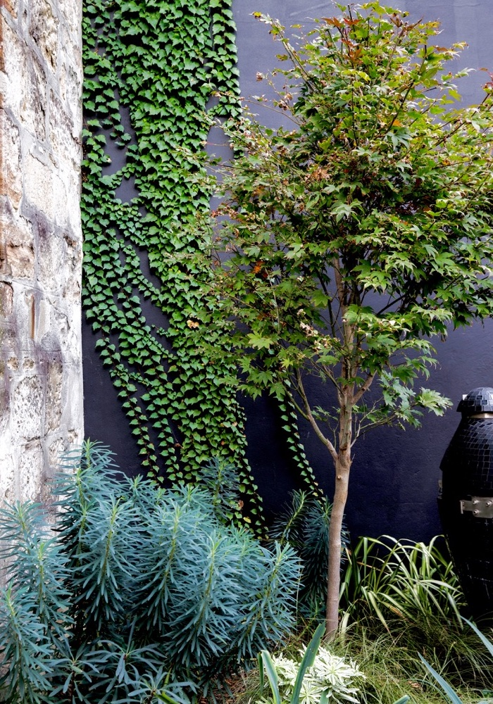 ficus climbing up the wall plus plants